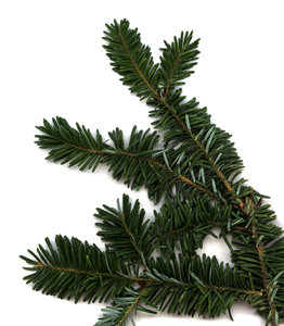 Evergreen: A piece of a Christmas Tree.Please visit my stockxpert gallery:http://www.stockxpert.com ..