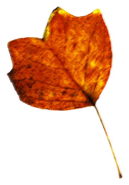 Leaf 53: A series of isolated fall leaveswith a rough pastel texture.