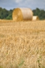 Hay bales  9: Hay bales in the field. Normandy France