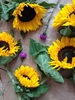 Sunflowers and Thistles: Positioned sunflowers and thistle flowers.