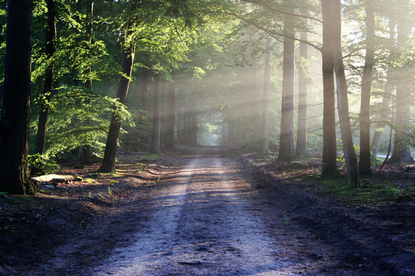 Enlight my path: Dusty road in the forrest, lightend by the early sun.