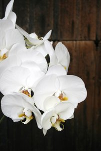 Orchid pleasure: Delicate flowers