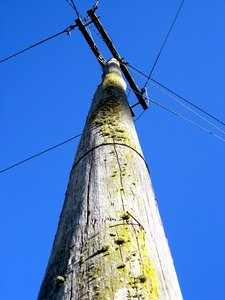 mossy telegraph pole: a very old telegraph pole.  Covered in a strange sort of moss :) Contrasted by a very blue sky