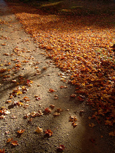 Fall days: This was shot in the late afternoon on a dirt path, lots of shadows add some texture.