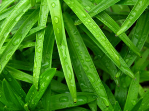 Green - background 2: If you need a green abstract background.