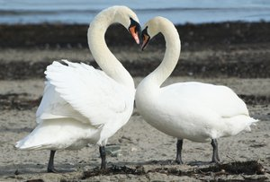 Love Swan's: little bit of tidying done with photo shop to rubbish on beach.