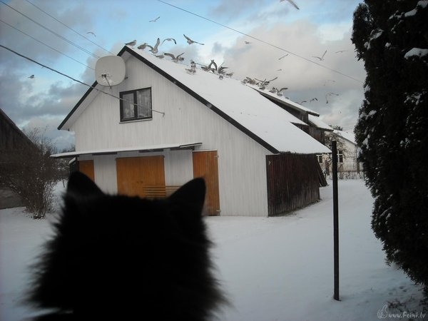 Cat and his hunt: IN winter you can't choose - stay in warm house or go out and get some fresh hunt.