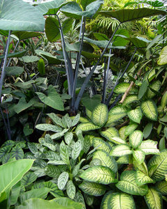 Rainforest: Tropical Foliage