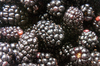 blackberries_02: close-up of ripe blackberries
