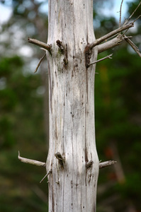 Dead wood: Close-up of a dead tree trunk