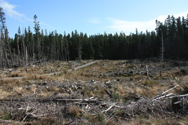 Forest clearing: Views of a felled area of woodland