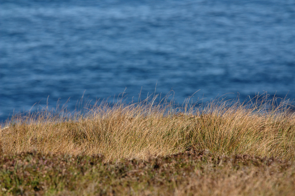 Sea, grass,cliff: Grass on the edge of cliff above the sea