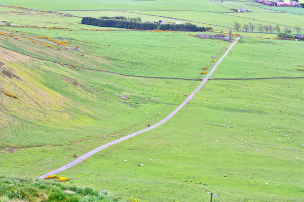 Uphill/downhill road: Views of a steeply climbing road/track on Craigowl Hill to the north of Dundee