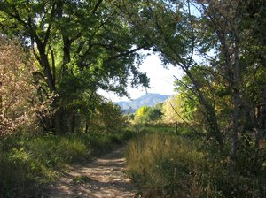 Down the trail: One of the trails through my favorite park.