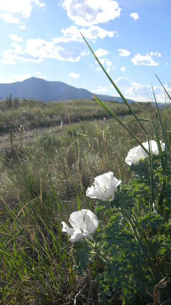 June: Some wild flowers in Bear Creek Lake Park, CO