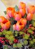 colorful tulips: colorful tulips