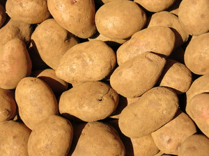 potatoes background: potatoes background