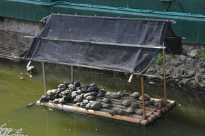 turtle house: turtle house