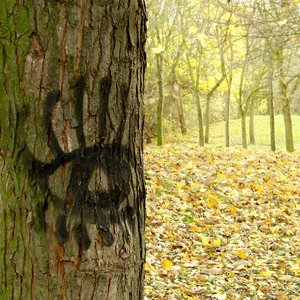 eye of the tree: park