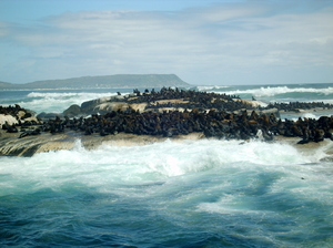 Seal Island: This Pic was taking on a trip round Seal Island off the coast of Cape Town South Africa.