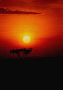 African sunsets: African sunsets