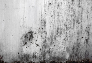Metal Shed Grunge: The painted side of a metal firewood shed that is scratched and rusted