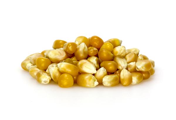 Free stock images | Popcorn Kernels