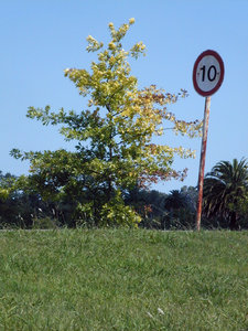 Slow road: A tree (American oak) and a traffic sign (max. speed 10 km/h) standing beside a road in a public park. 