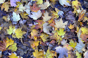 Autumn Colors: Autumn colors from Portland, Oregon.