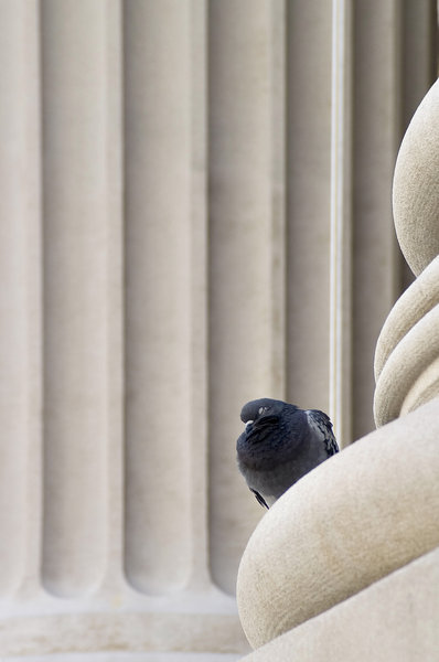 Boid in NYC: A bird resting next to a column in New York.
