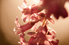 Pink flowers in dawn sunlight: pink blooms with sun behind