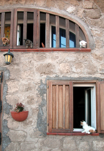 Dogs and cats: Dogs and cats appear at windows of a house in Ventotene isle (Italy)