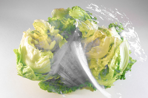 lettuce 43435: lettuce black and white bland with color