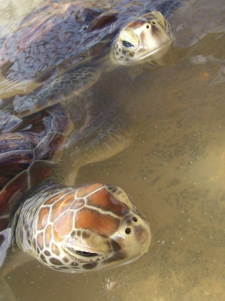 TURTLES: Turtles closeup