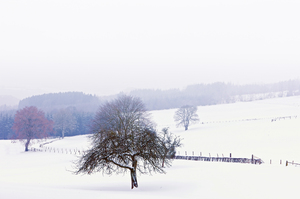 Winter in the Ardennes: Picture wat taken in the Ardennes, Blelgium.