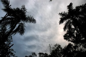 jungle sky: no description