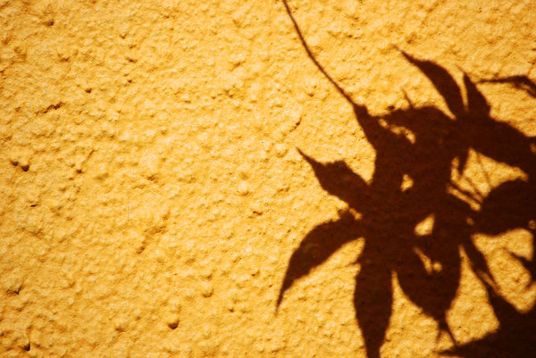 acer sombra: