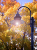 Fall Street Lamp: Illuminated street lamp against autumn leaves.