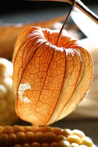 Dried Physalis: Dried Physalis, some call it a weed, but they're attractive indeed. Doing allright as decoration.