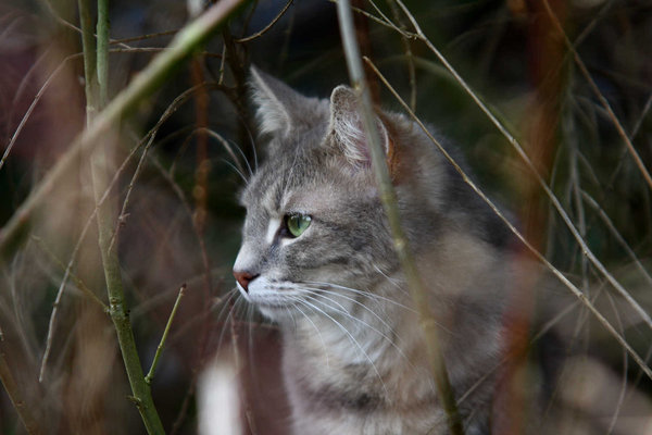 'Wild' cat: This stranger was strawling through my garden in spring. Probably looking for food.