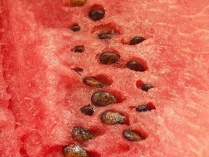 Fruits - melon: Watermelon. Other fruits also in the series.
