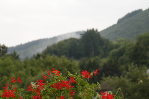 Flowers with background: Flowers with background of hills in Luxembourg.