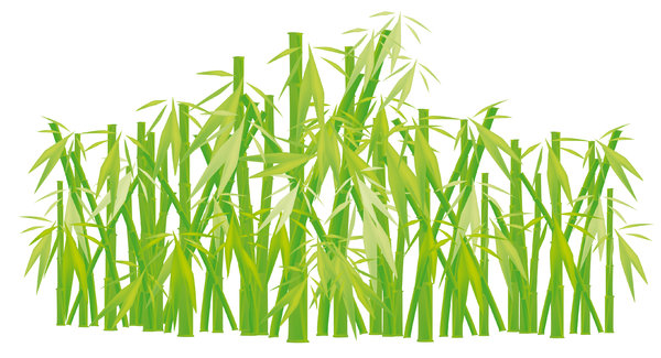bamboo: made in illustrator