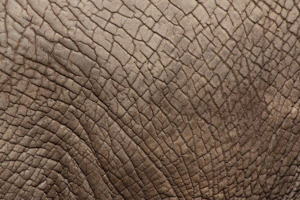 Elephant Skin: Looking forward to feedback! Please credit if possible or drop me a line via http://www.jule.se