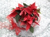 Poinsettia 2: Christmas decoration