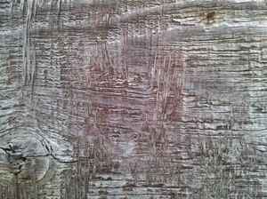 Old wood: Old wood texture.