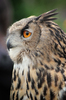 Birds of prey: Birds of prey