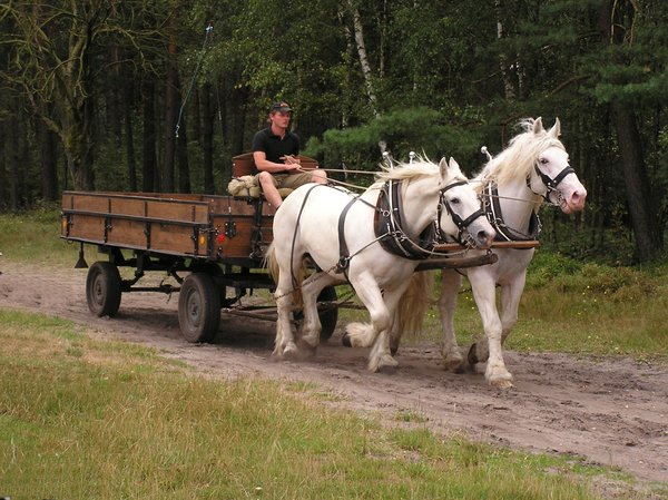 drive a coach...: in the forrest...