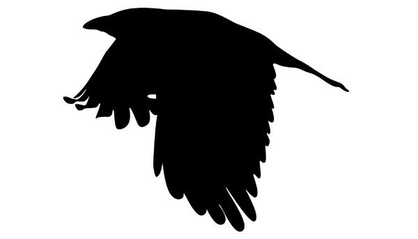 Silhouette Crow: another flying crow; hope it can be of use to you