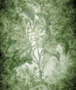 Green floral background: Botanical drawing was used on several layers for this texture